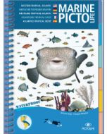 Marine PICTOLIFE - Western Tropical Atlantic